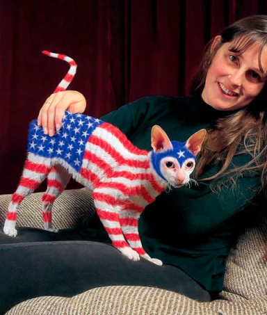 America Cat
